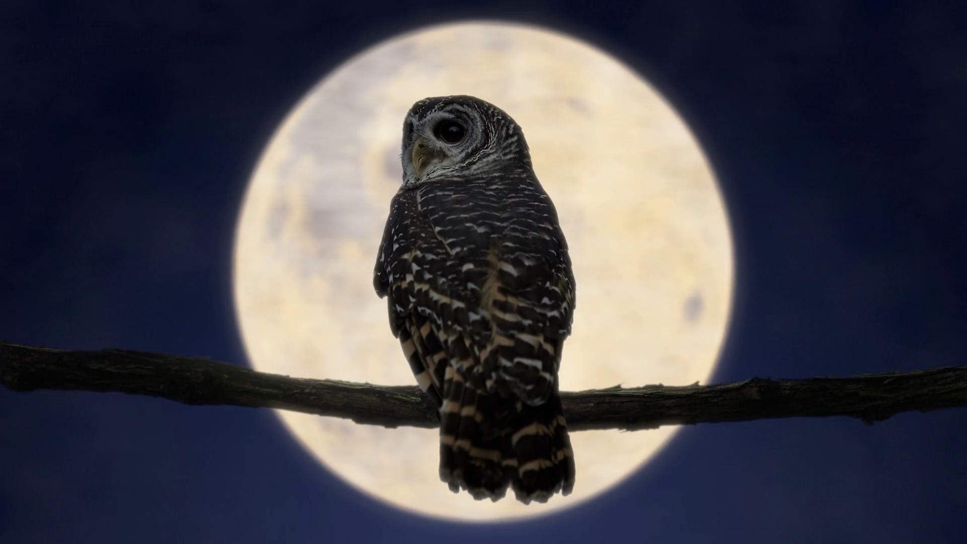 giới thiệu - owlvietnam